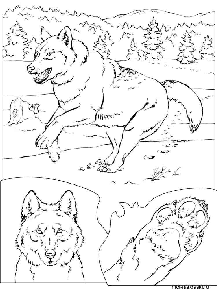 раскраски волк скачать и распечатать раскраски волк