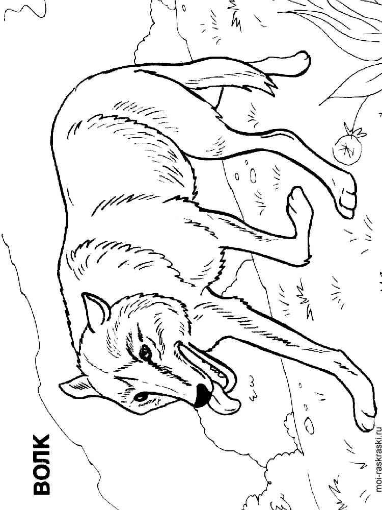 Раскраски волк - 5