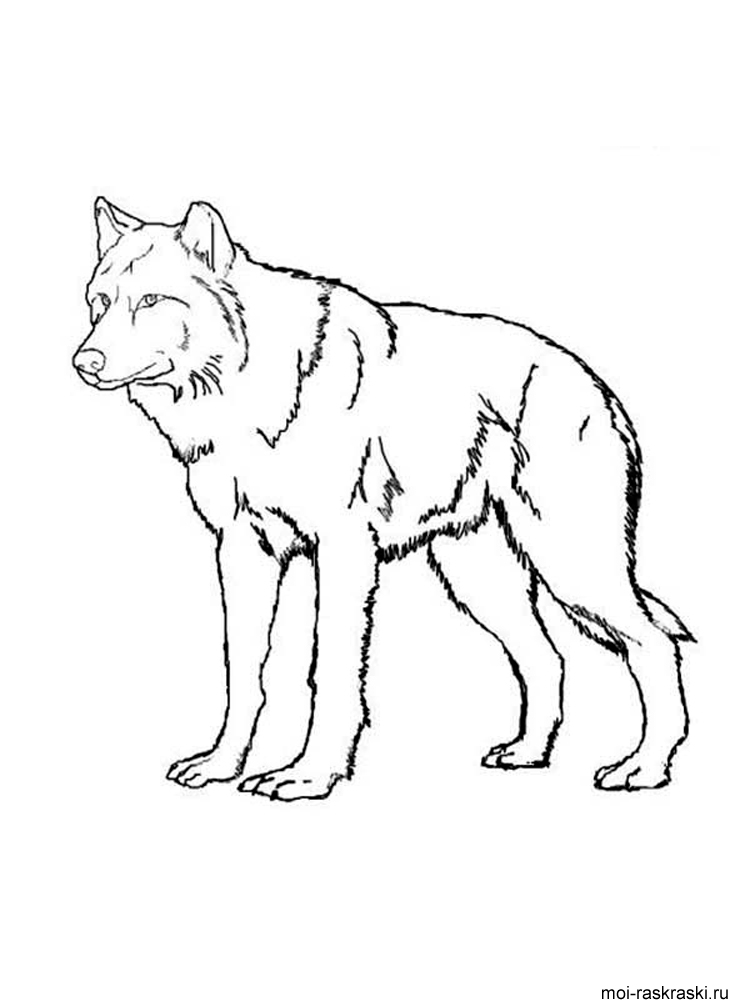 Раскраска волк и собака