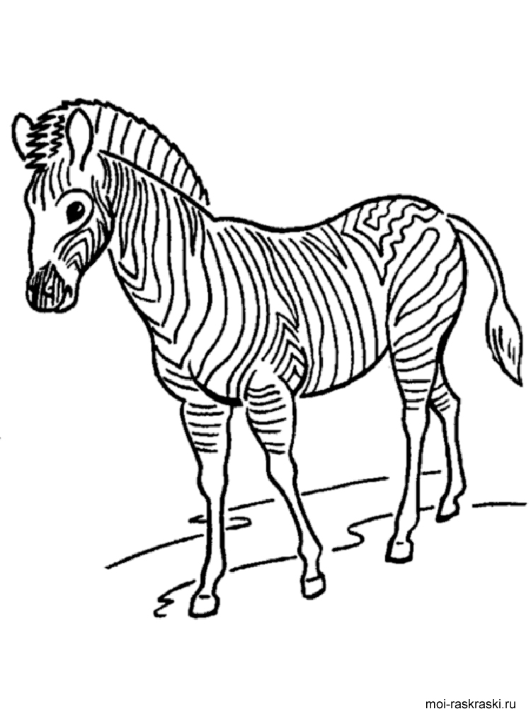 zebra striped coloring pages - photo#18