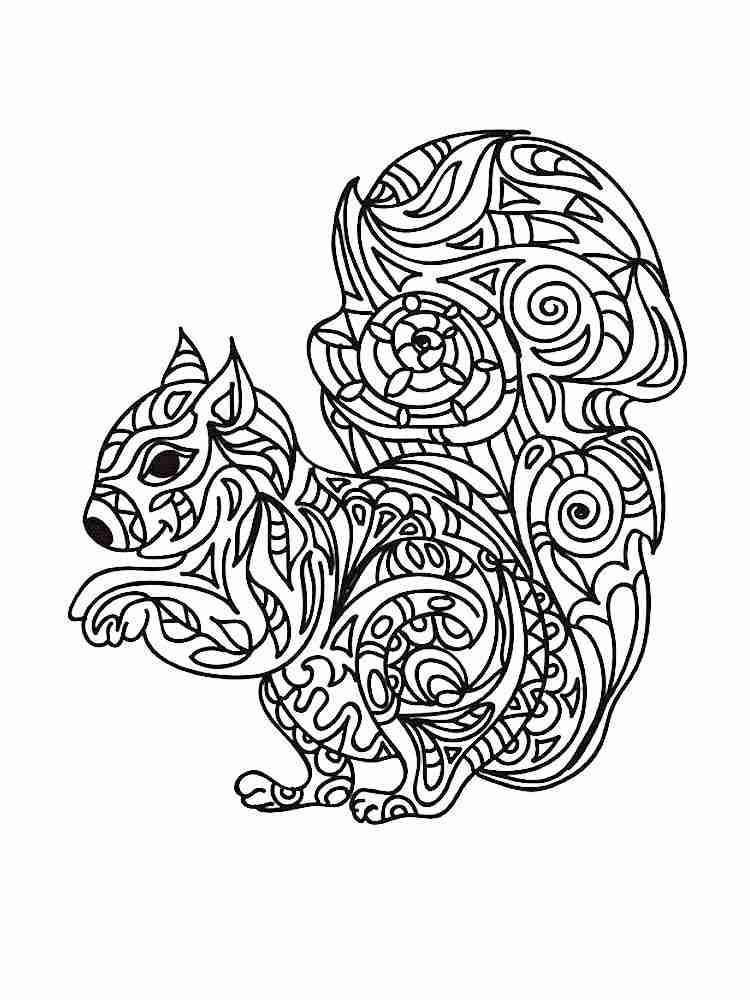 Раскраски Белка Антистресс - распечатать в формате А4