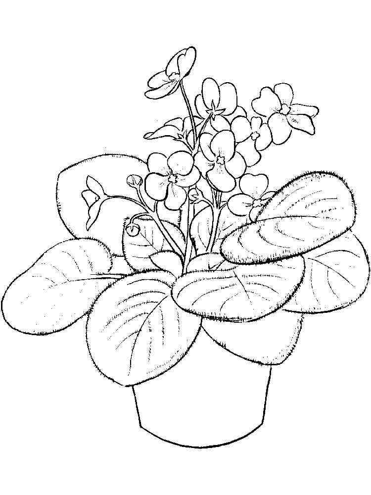 цветок на блюдце картинки