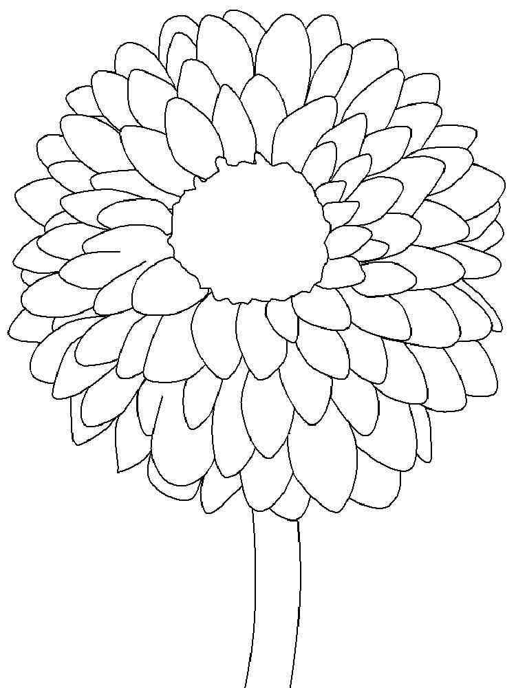 раскраска цветок астра распечатать под названием