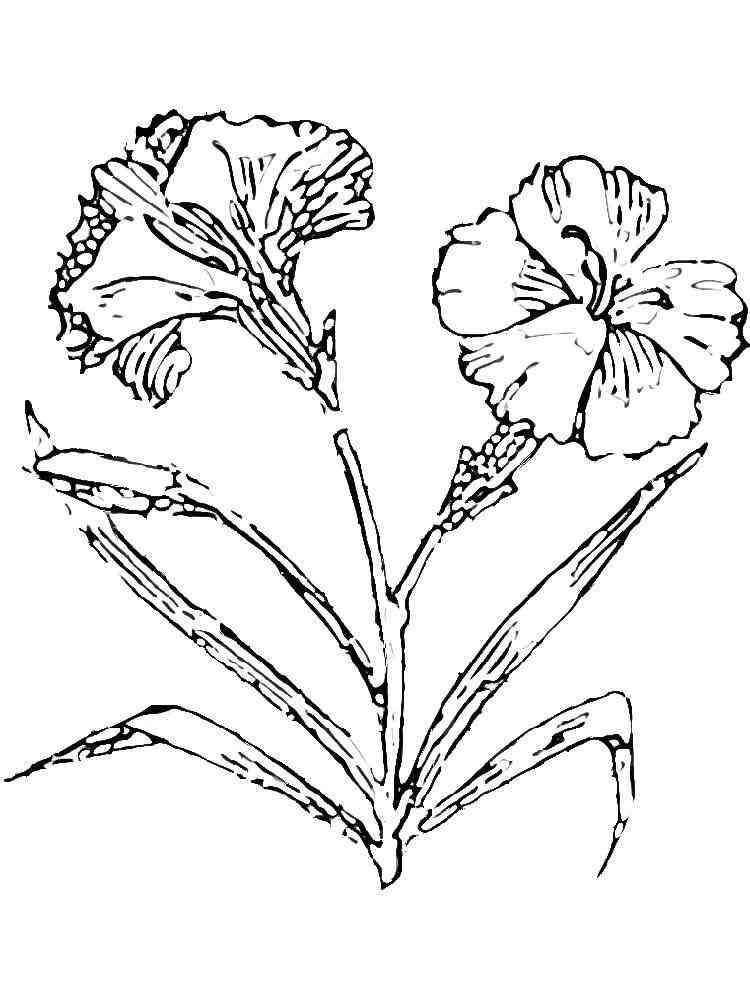 цветы гвоздика картинка раскраска схватить его