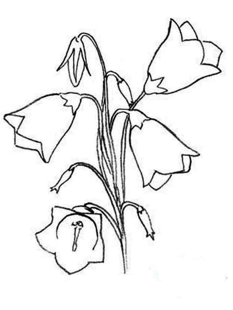 Раскраски цветы Колокольчики - распечатать в формате А4