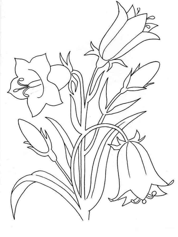 Цветок колокольчик раскраска распечатать