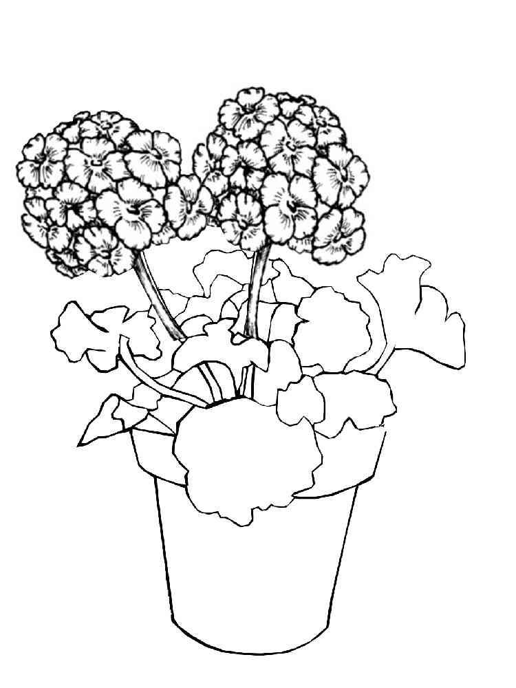 Раскраска Комнатные растения - распечатать в формате А4