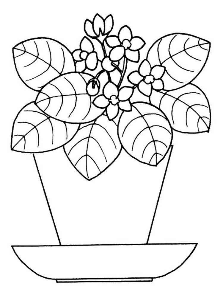 раскраска комнатное растение фиалка для редактирования используются