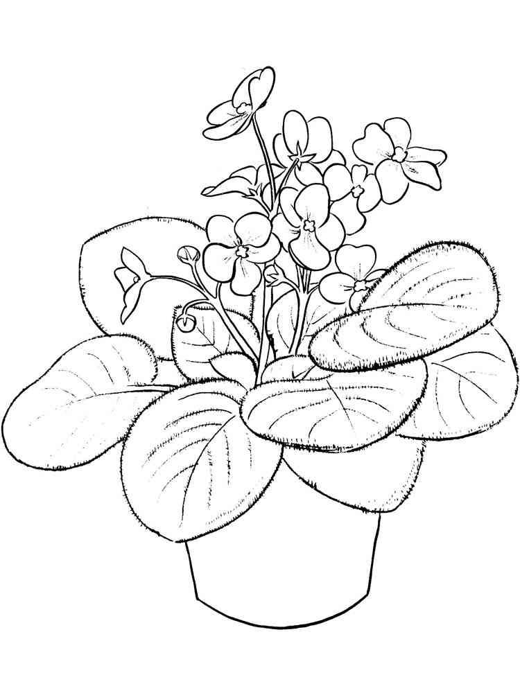 рисунок комнатные растения наше время благодаря