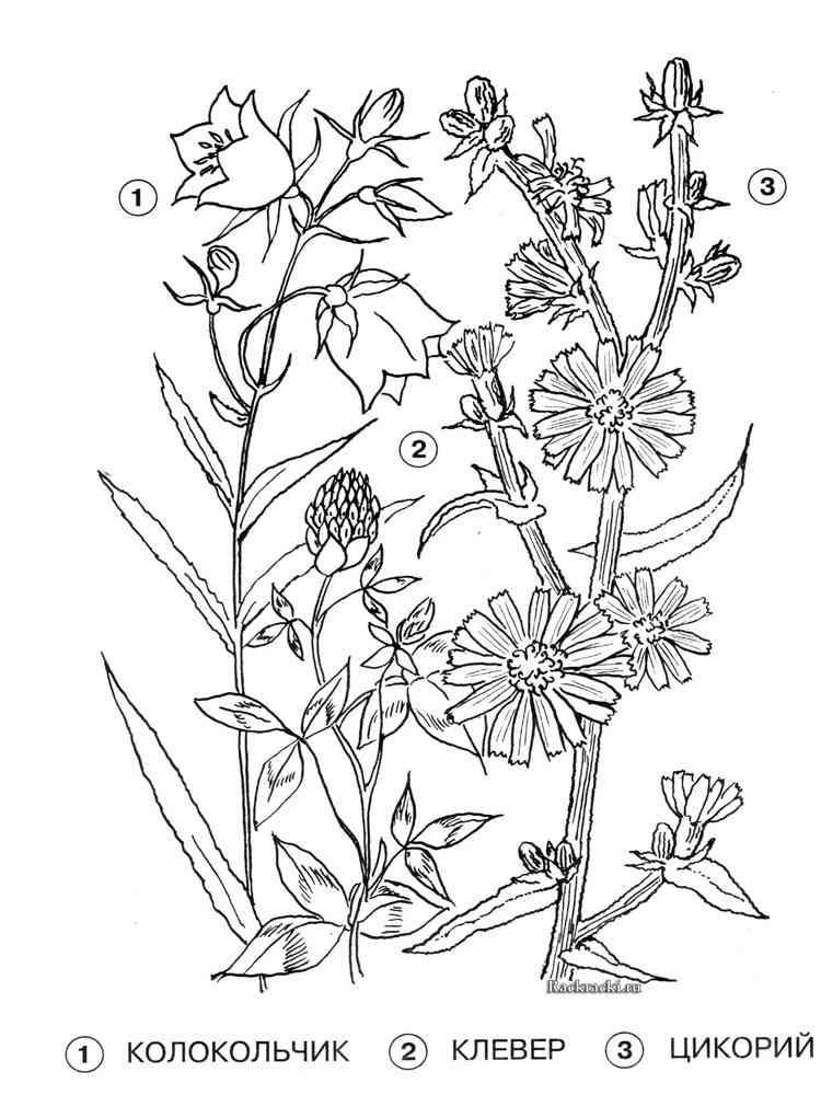 Лекарственные растения раскраска для малышей