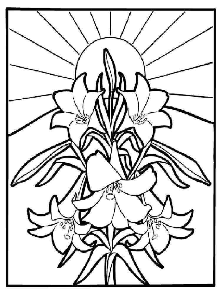 Цветок лилия для раскраски