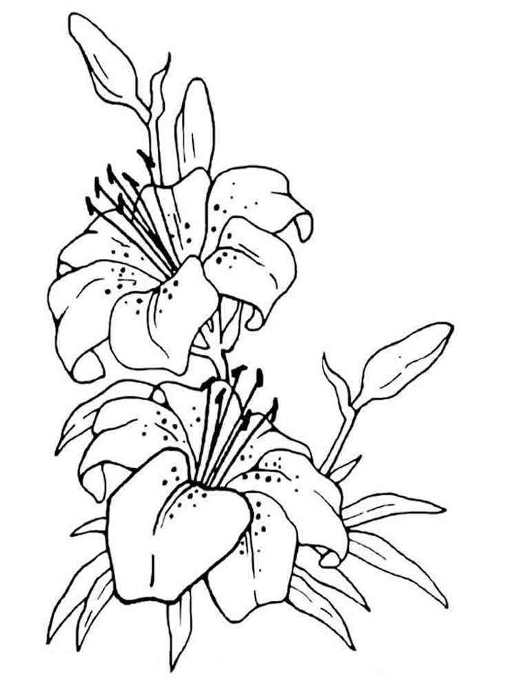 Цветок для срисовки 188