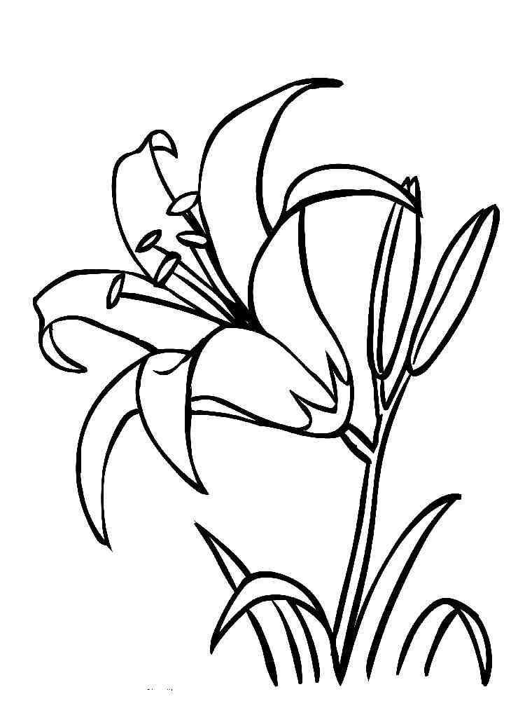 Лилии раскраски