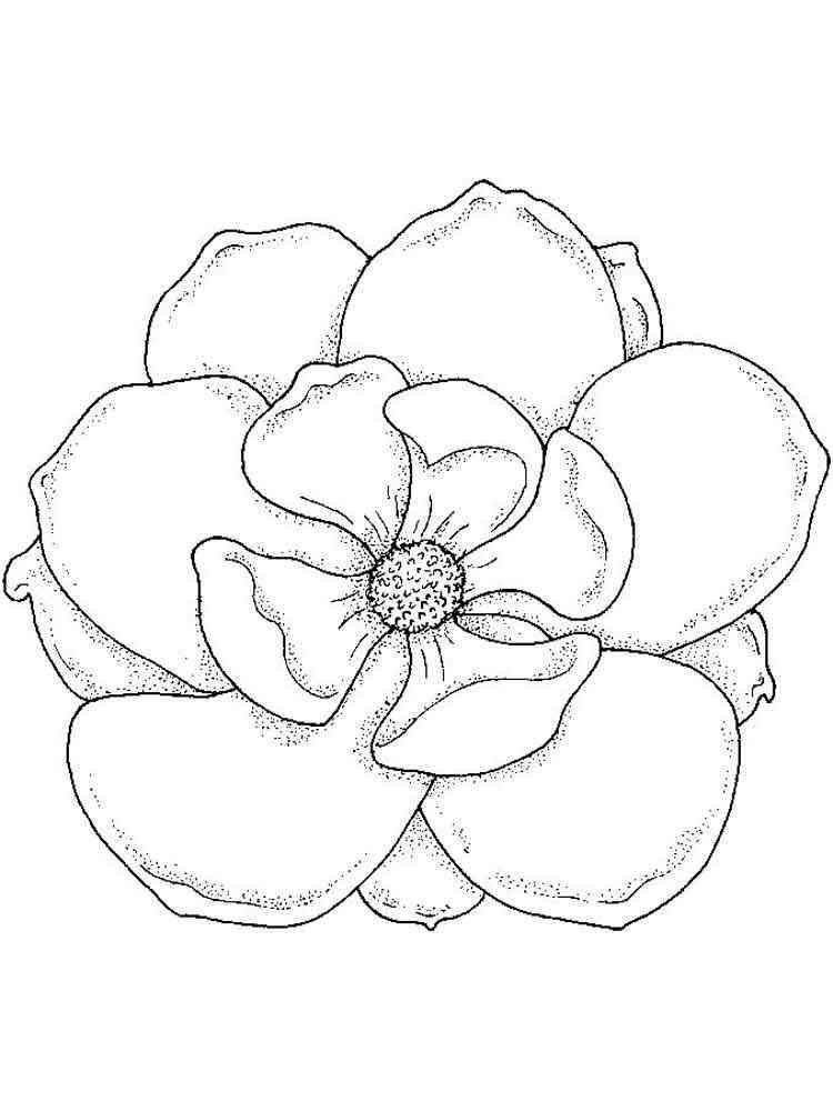 как ухаживать цветы картинки напечатать вот самыми популярными