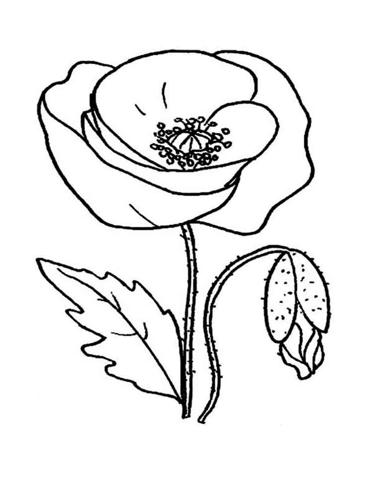 Veterans Day Poppy Coloring Pages
