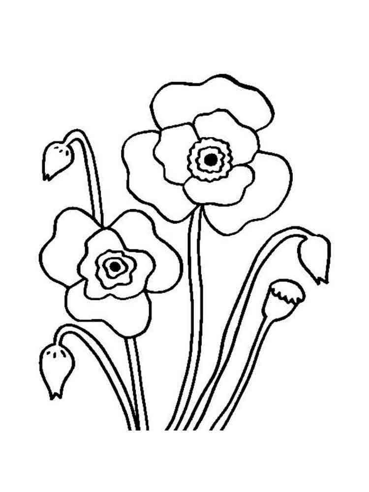 Раскраска цветы маки