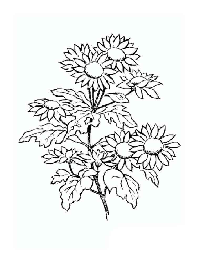 coloring pages letter names daisy - photo#14