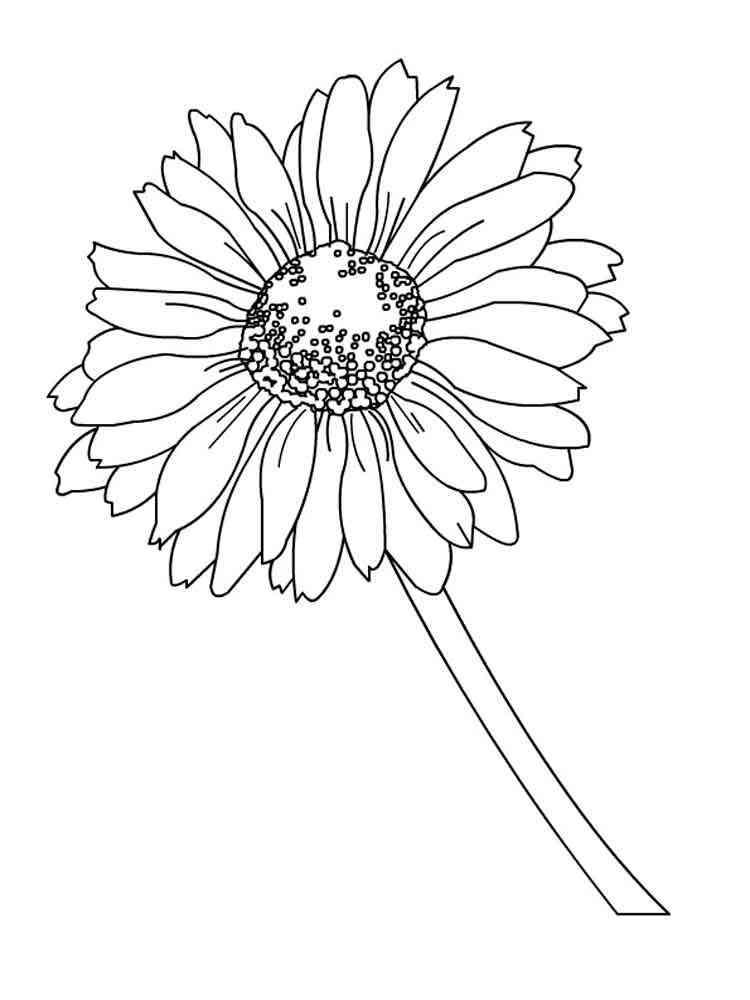 цветы герберы рисунки карандашом поиска нужного