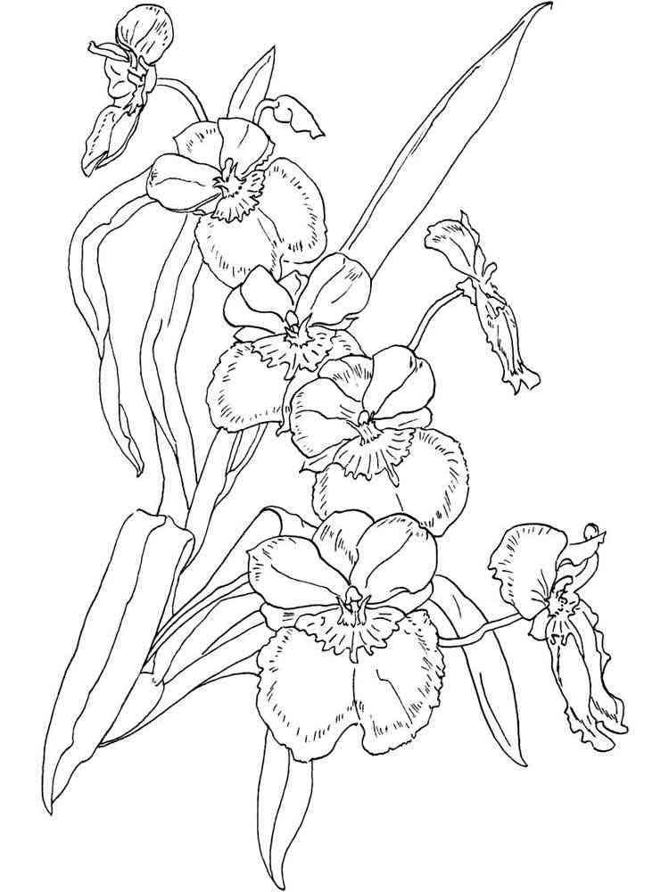 Раскраска цветок Орхидея - распечатать в формате А4
