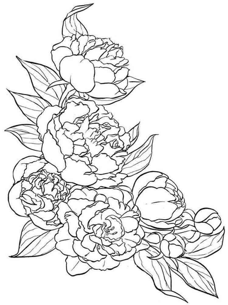 17+ Раскраска Цветы Пионы