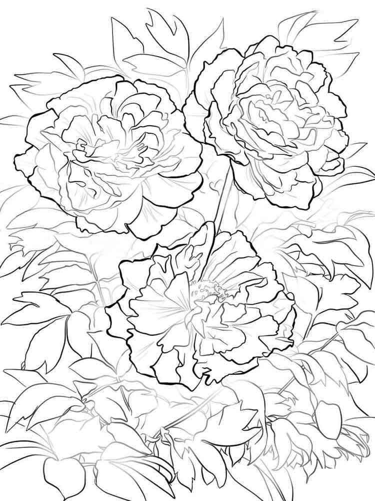Раскраска цветы Пионы - распечатать в формате А4