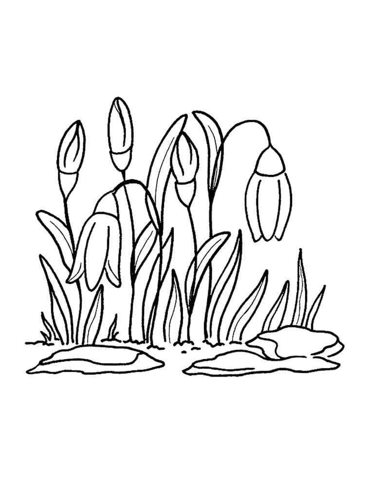Раскраска Полевые цветы - распечатать в формате А4
