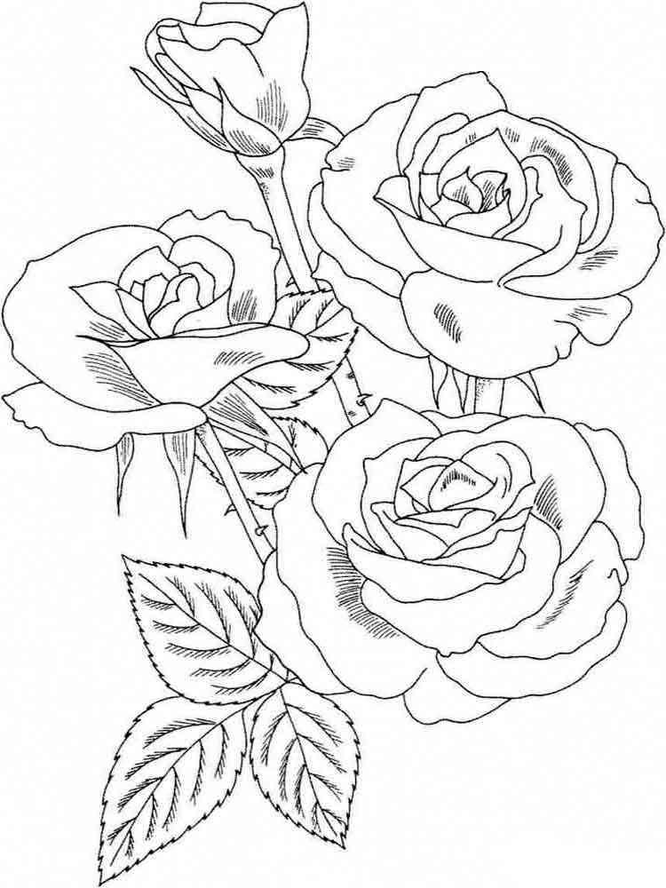 Кленовым листом, розы открытка раскраска