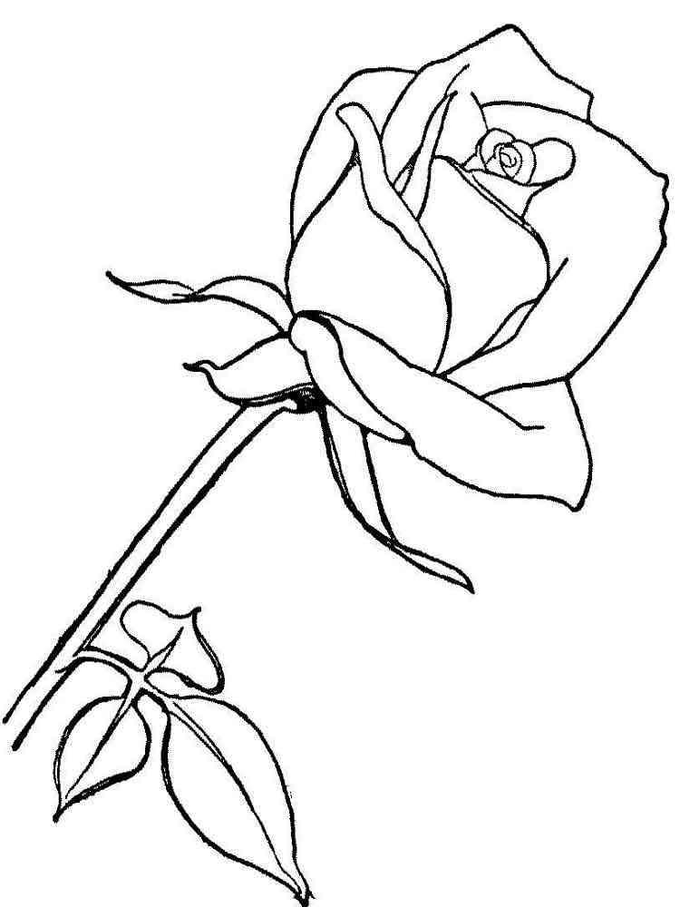 раскраски цветы розы скачать и распечатать раскраски цветы розы
