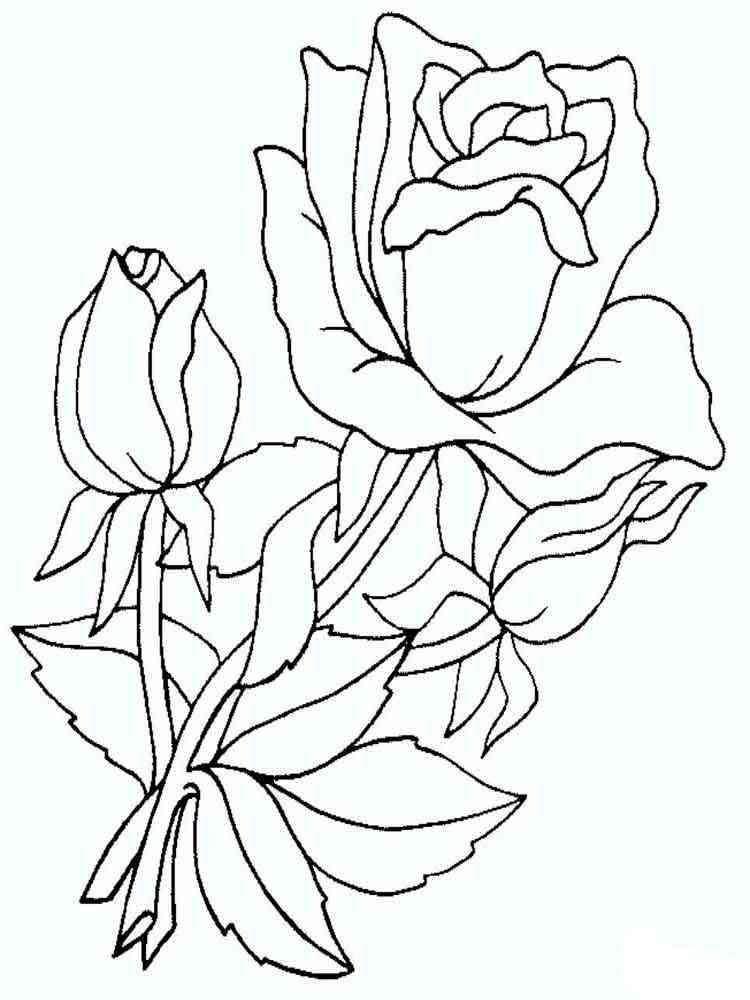 Раскраски цветы Розы - распечатать в формате А4