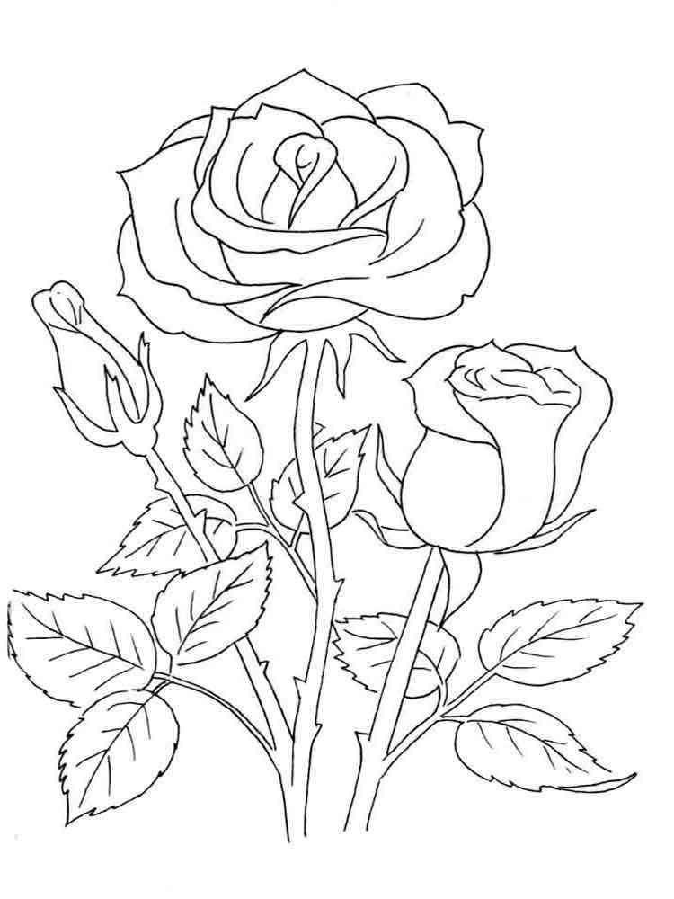 Раскраски розу распечатать