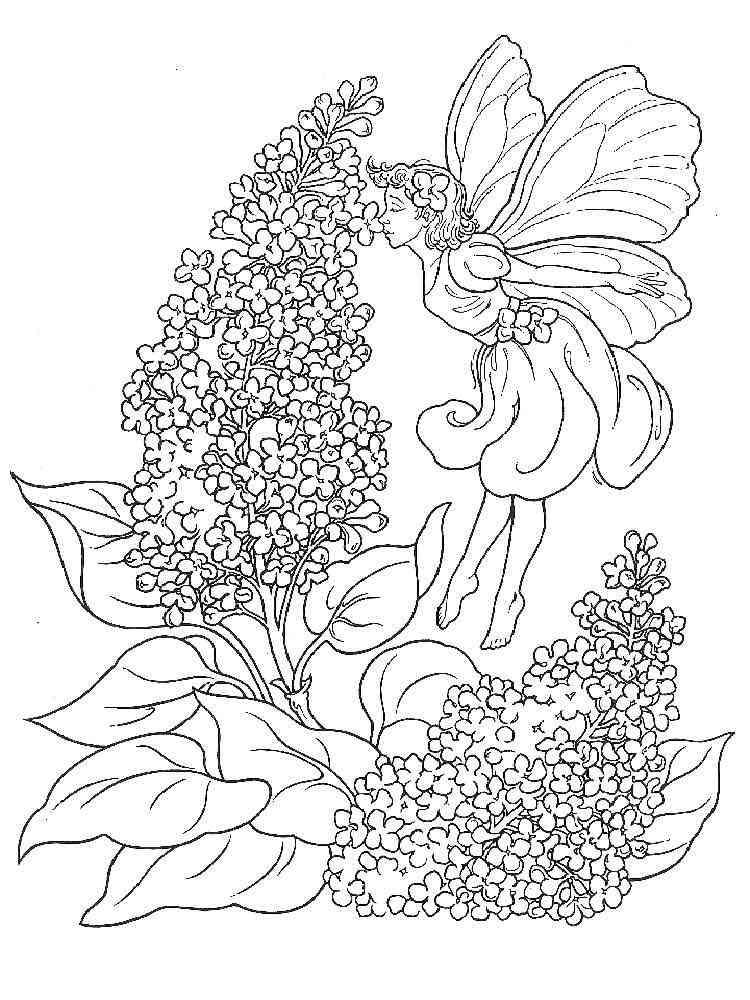 Раскраска Сирень - распечатать в формате А4