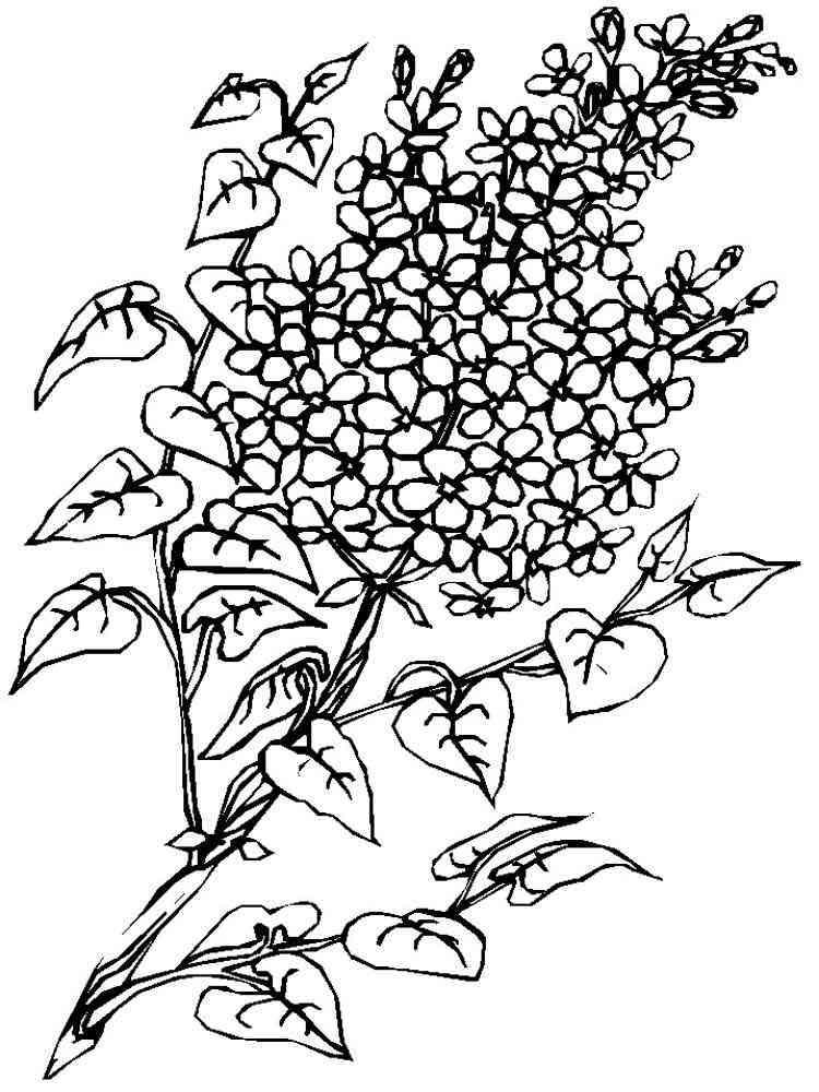 раскраска цветки сирени считает, что личная