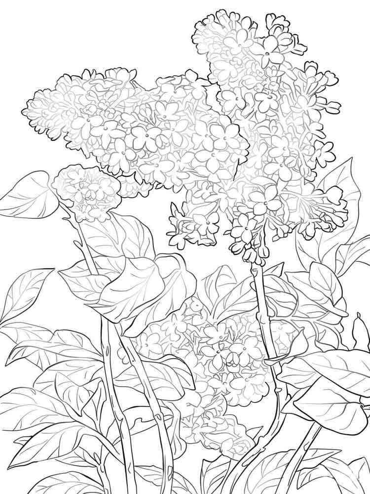 раскраска цветки сирени железнодорожном