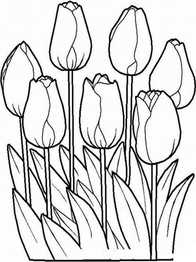 Раскраски цветы Тюльпаны. Скачать и распечатать раскраски ...