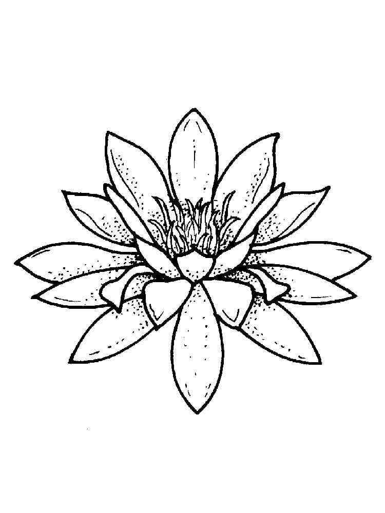 Раскраска Водная Лилия - распечатать в формате А4