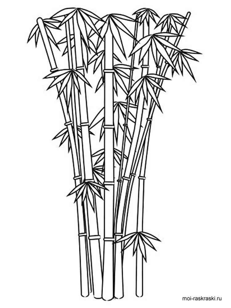 Раскраска бамбука