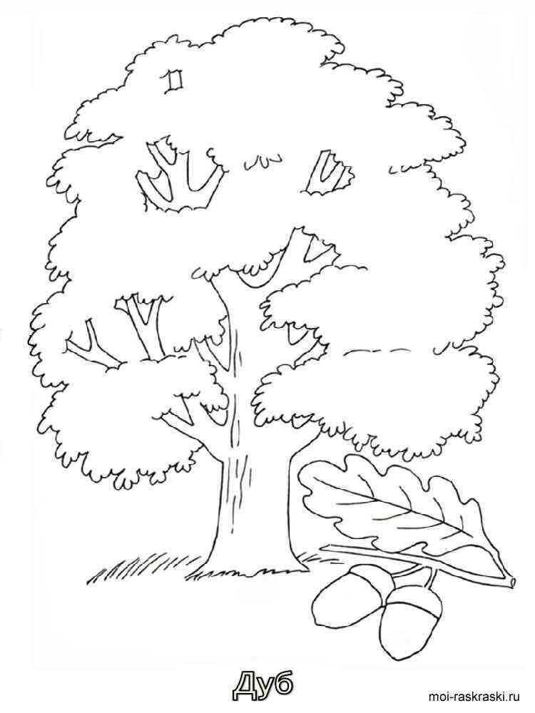 Раскраска Дуб - распечатать в формате А4