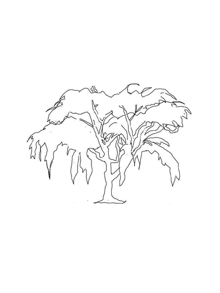 Раскраска Ива - распечатать в формате А4