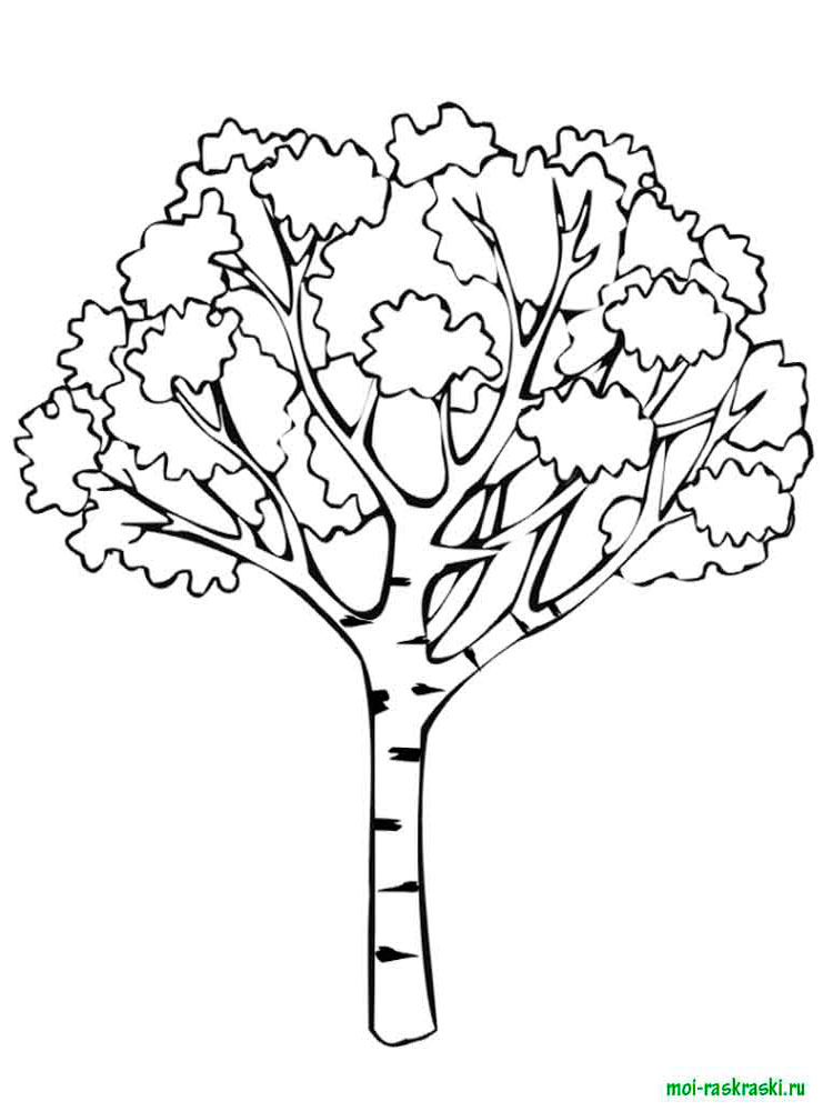 Раскраски Деревья Картинки