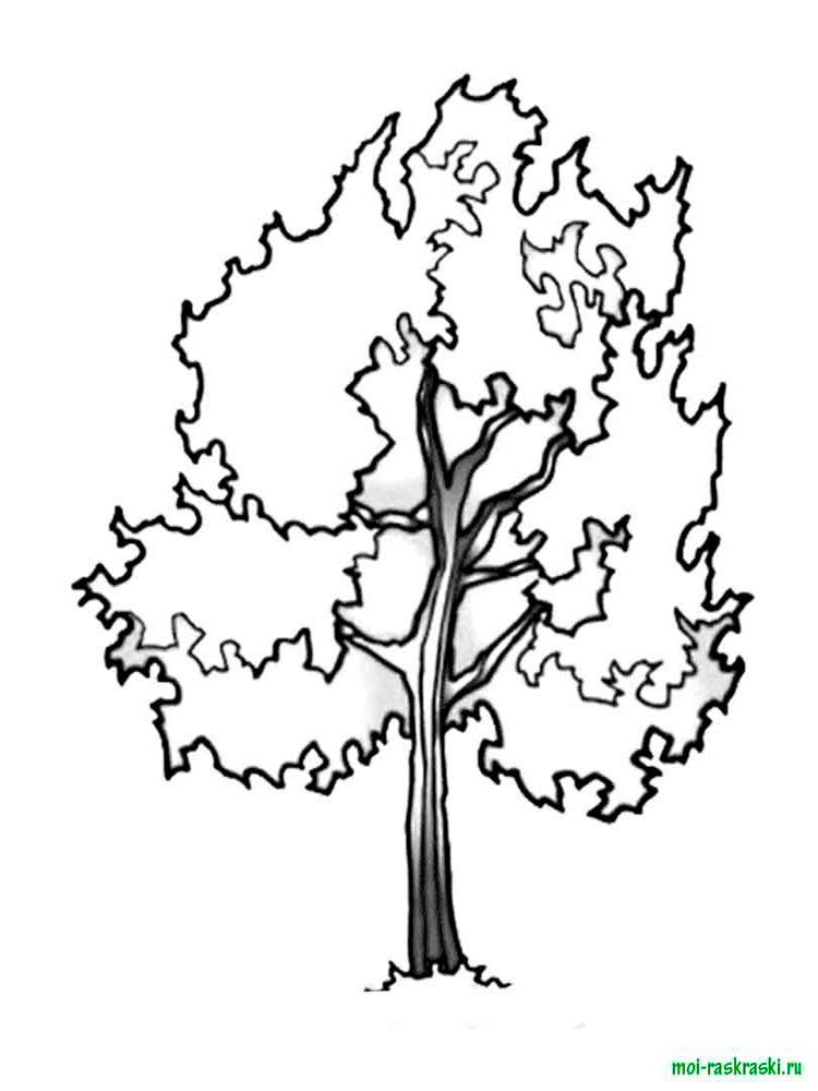 Раскраски Деревья. Скачать и распечатать раскраски Деревья