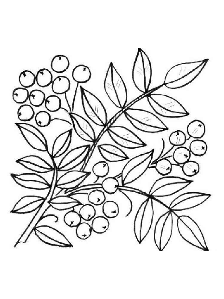 раскраска гроздь рябины распечатать оформления ногтей