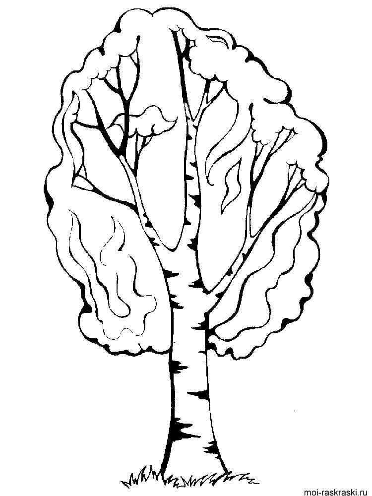 Дерево береза для раскраски