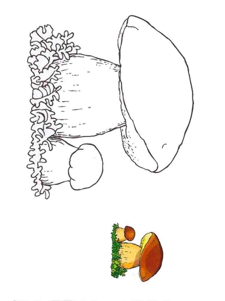 Раскраски Белый гриб - распечатать в формате А4