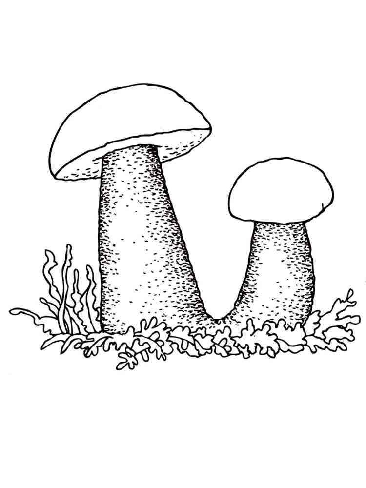 Картинка раскрась гриб