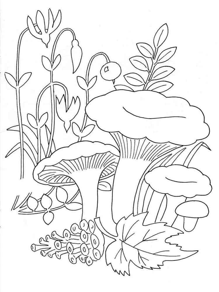 Раскраски грибы Лисички - распечатать в формате А4