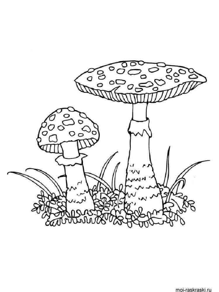 Раскраска гриб грибы