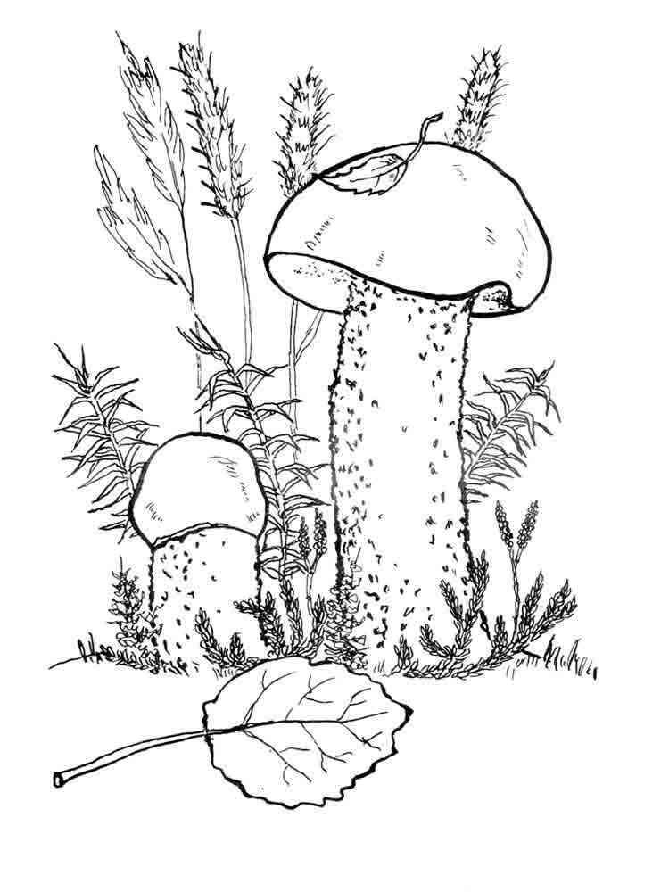 Картинки раскраски с грибами