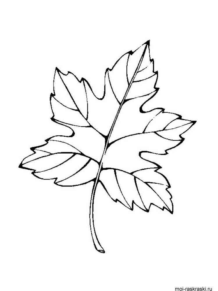 Раскраски виноградный лист