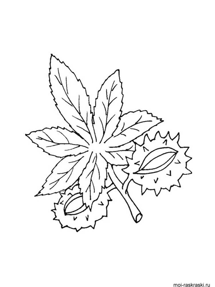 Что это за листья раскраска