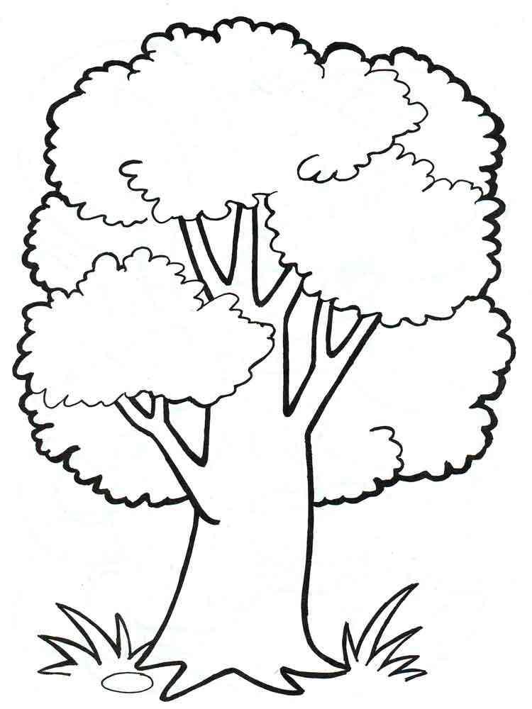 картинки раскраски растения деревья любитель хотел